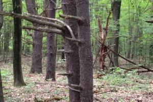 Runaway Hobbit Tree