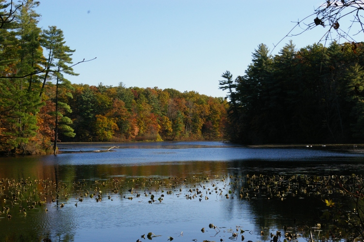 A Swan Lake 01.JPG