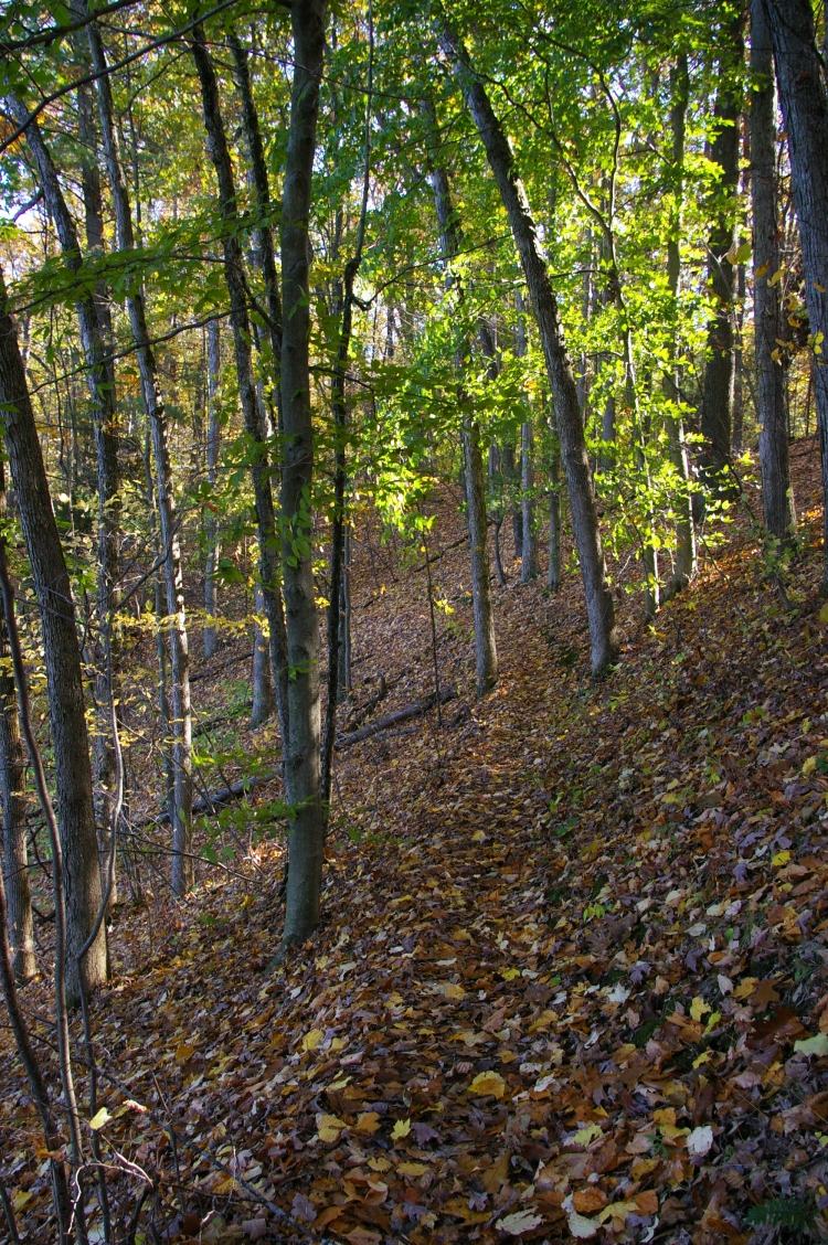A Swan Lake Trail MI.JPG